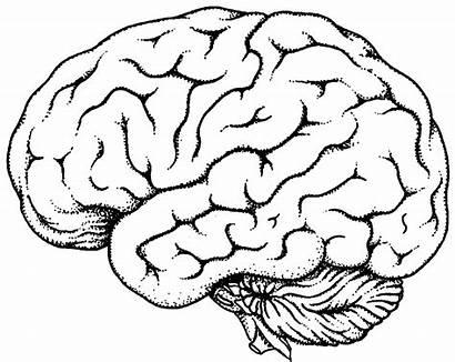Brain Clipart Clipartbest Chiropractic Repair