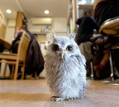 owl as a pet london opens a bar where you can pet owls