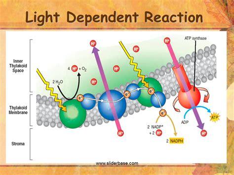 dependent definition equation for light dependent reaction tessshebaylo Light