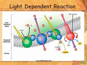 Equation For Light Dependent Reaction