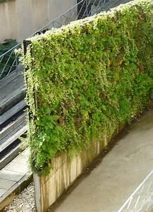 Mur Anti Bruit Végétal : mur v g tal patrick blanc battu calais mat riel ~ Melissatoandfro.com Idées de Décoration