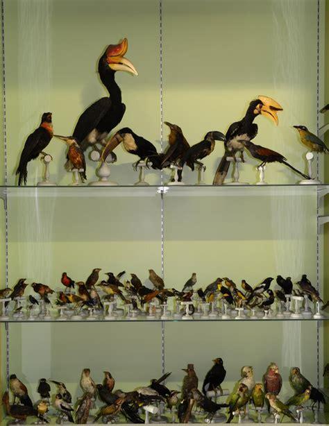 forum des images salle des collections salle d histoire naturelle mus 233 e de valence