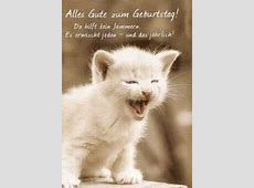 Geburtstag Bilder Katzen gloriarerelist site