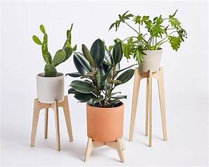 plant, stands