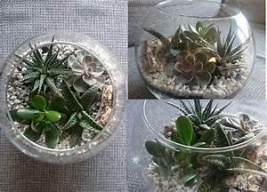 Sukkulenten Im Glas Pflanzen : kakteen pflanzen goldfischglas wohnzimmer dekoideen kaktus im glas fischglas glas ~ Eleganceandgraceweddings.com Haus und Dekorationen