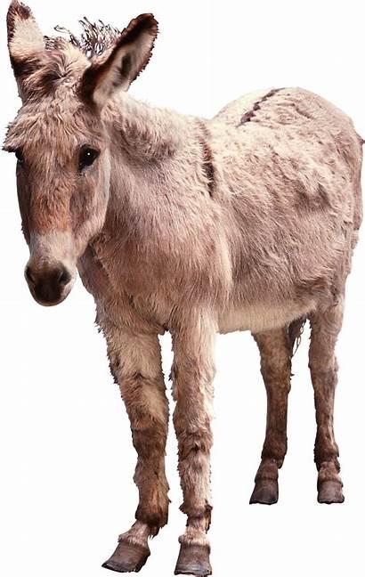 Donkey Animals Transparent Pngimg Animal Backgrounds Resolution