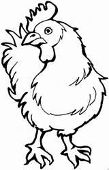 Chook Chicken Tiere Curiosa Kopf Dreht sketch template