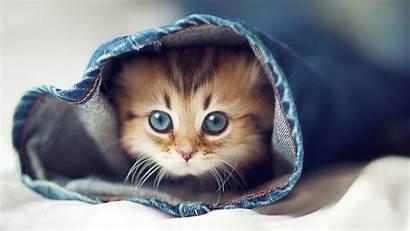Cat Wallpapers 1080p Desktop Pc Cats Meme