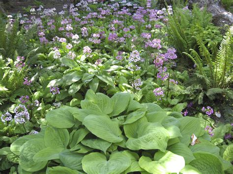 Schattengarten: Ideen Zur Bepflanzung