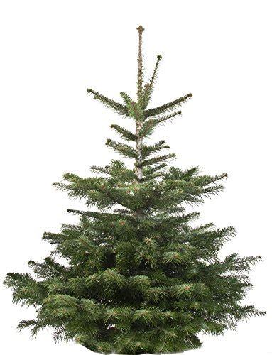 echter weihnachtsbaum nordmanntanne h ca 145 160 cm