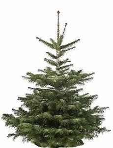 Künstliche Weihnachtsbäume Kaufen : frische weihnachtsbaum kaufen my blog ~ Indierocktalk.com Haus und Dekorationen