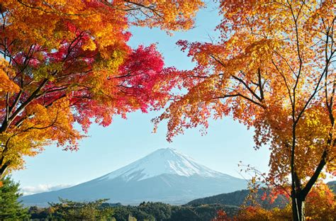 autumn  japan hd wallpaper background image