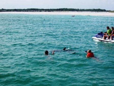 dolphin tours afroculture tours