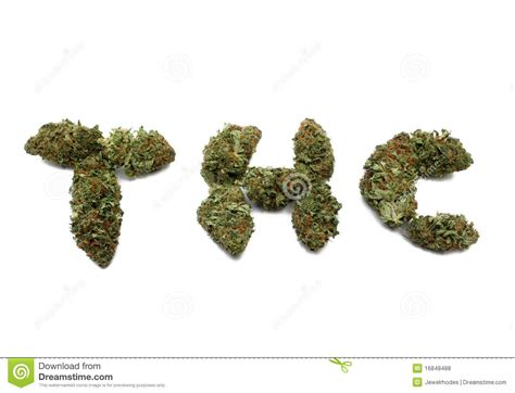 isolated marijuana bud spells thc stock photo image