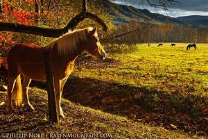 90 best images about Smokey Mountains Cades Cove Tennessee