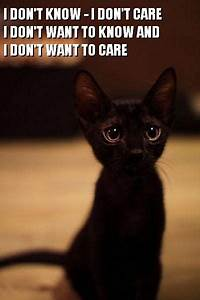 Crazy Cat Pictures With Captions | Crazy, Lazy, Silly and ...