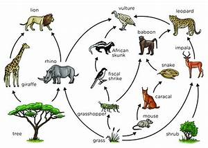 grassland ecosystem food chain | Foodfash.co