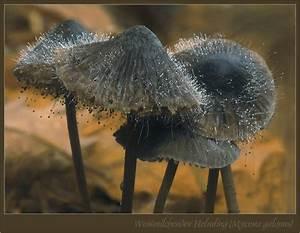 Schimmel In Pflanzen : schimmel pilz foto bild pflanzen pilze flechten pilze flechten pilze bilder auf ~ Bigdaddyawards.com Haus und Dekorationen
