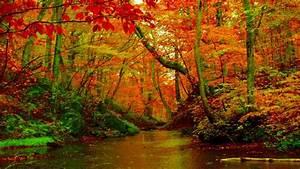 Autumn Forest River Desktop Background Hd Wallpapers 1560 ...