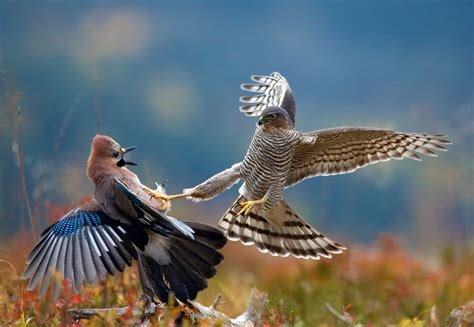 bigpicture natural world photography competition  open