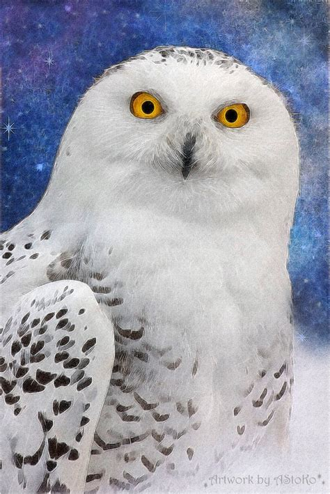 Harry Potter Wallpaper Hedwig Owl by Hedwig Harry Potter Owl By Astoko On Deviantart