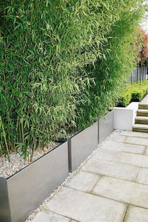 Idée Haie De Bambou En Jardinières  Amenagement Exterieur