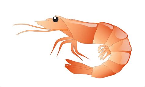 prawn clipart clipground
