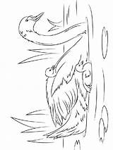 Coloring Pages Swan Swans Birds Printable sketch template