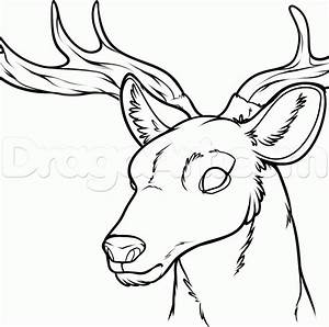 How to Draw a Deer Head, Step by Step, forest animals ...