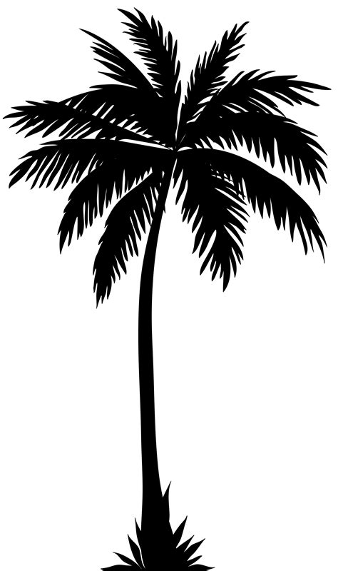 palm tree clipart black and white no background palm tree silhouette png clip image gallery