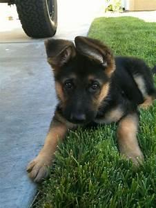 Top 5 Cutest Dog Breeds :) | Doggies ️ | Pinterest ...