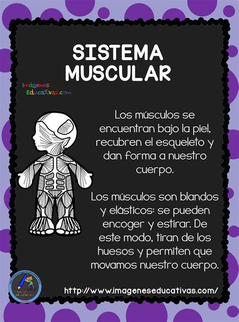 el cuerpo humano aparatos y sistemas para primaria