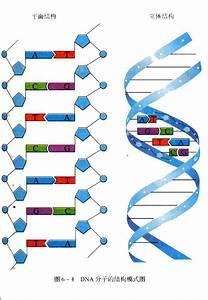 Biochem Quiz 5 - Biochemistry 2580 With Dawson  Wijekoon At University Of Guelph