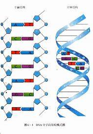 Best 25 ideas about dna diagram find what youll love dna structure labeled diagram ccuart Images