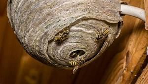 Fliegen Abwehren Draußen : wespen nat rlich abwehren stressfrei drau en genie en codecheck info ~ Whattoseeinmadrid.com Haus und Dekorationen