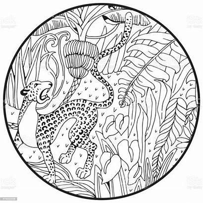 Leopard Jungle Coloring Dschungel Exotic Animals Exotische
