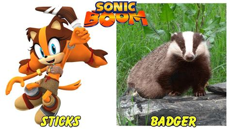 Sonic Boom Characters In Real Life Animals Youtube
