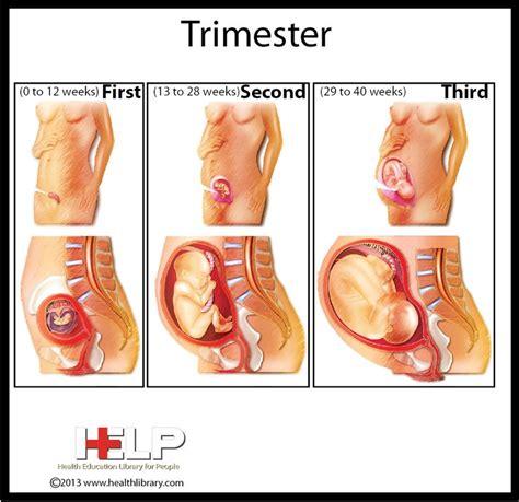 3 Cara Agar Cepat Hamil Tahapan Usia Kehamilan Trimester 1 2 Dan 3