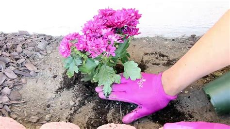 how to plant flowers garden 2015