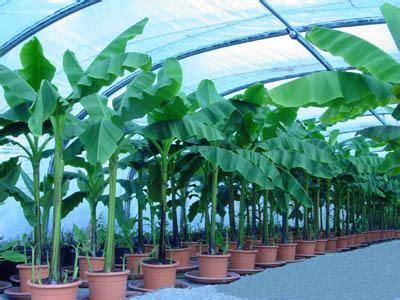 les plante exotique explication des plantes exotique
