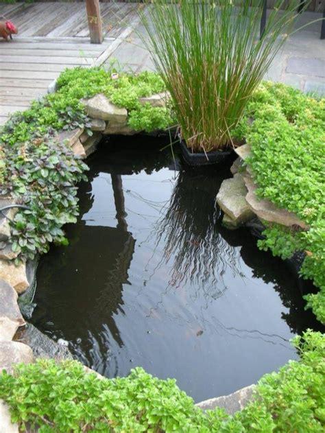 tips   minimalist fish pond design  ideas