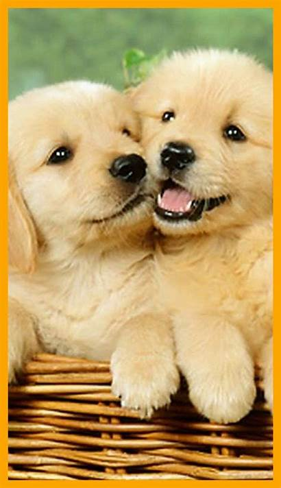 Dog Puppy Wallpapers Iphone Dogs Puppies Screen