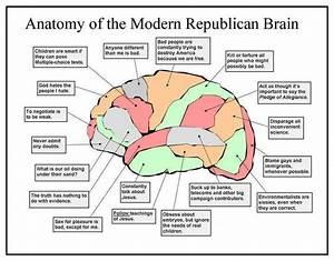 Brain Diagram | POLITUSIC