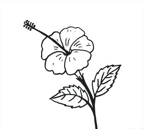 27 galeri gambar sketsa bunga untuk pemula terkeren