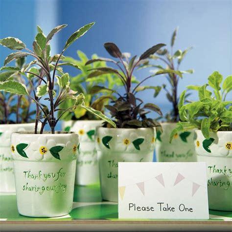mini flower garden plant pots favours confetticouk