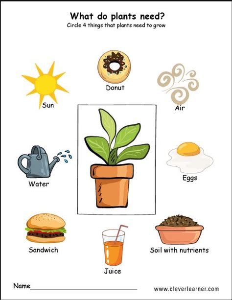 needs of plants worksheets for preschool preschool