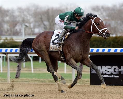 army mule racing carter horse pa bred sizzles stakes furlongs debut seven take thoroughbred midlantic poll heads g1 romps latest