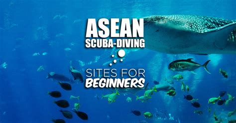 Calm And Beautiful Asean Dive Sites Perfect For Beginners