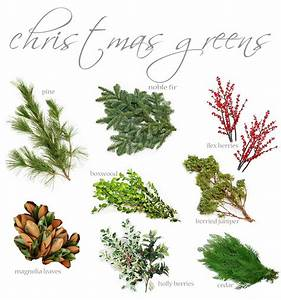 flores del sol: know your christmas greens
