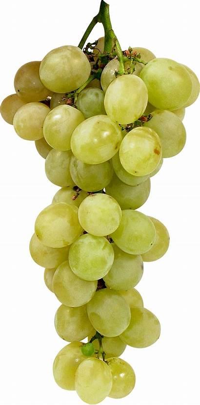 Grape Freepngimg Fruits Pngimg